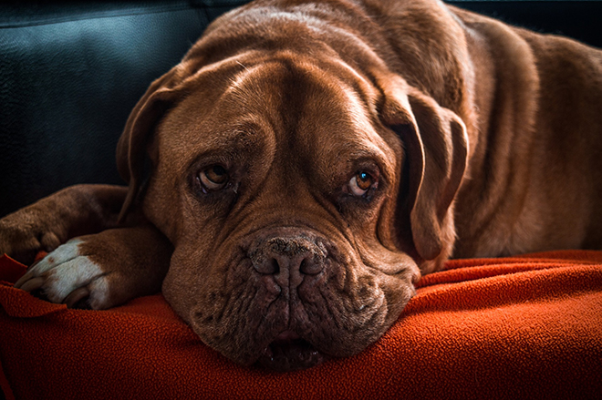 Artrosis canina. ¿Qué es y a qué perros afecta?