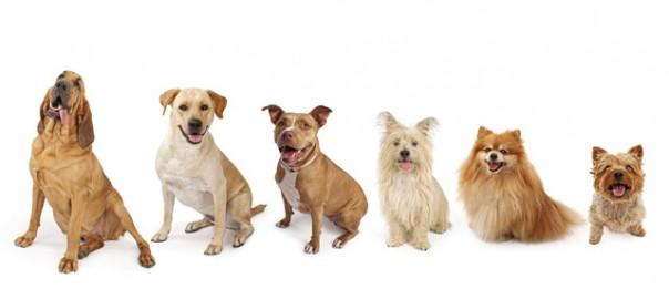 31 eleccion perro