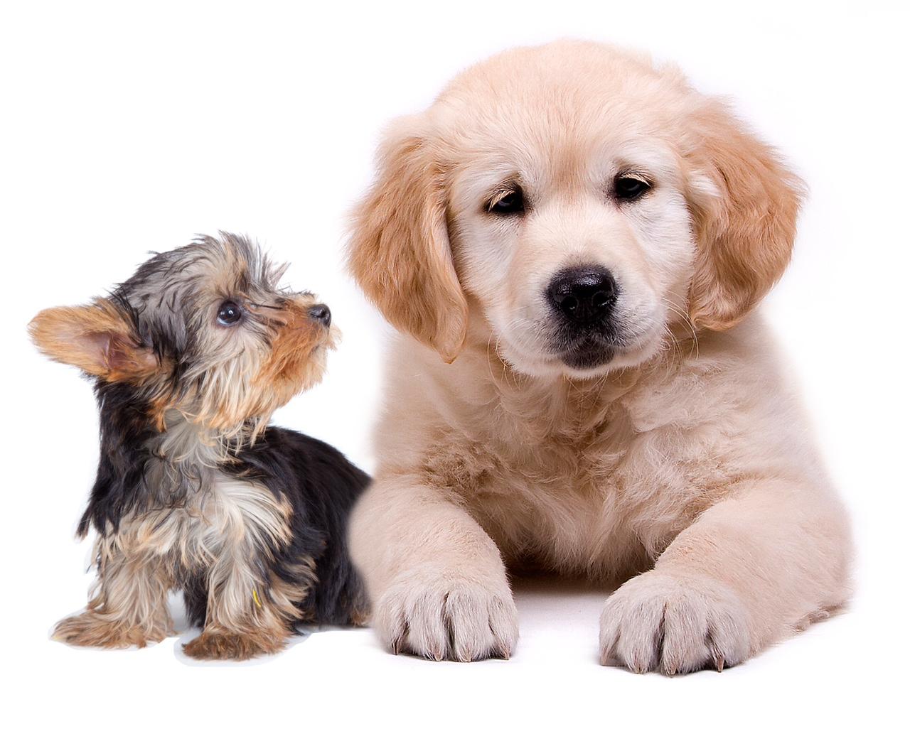 Cu ndo se hace adulto un cachorro - Cuando se puede banar a un cachorro ...