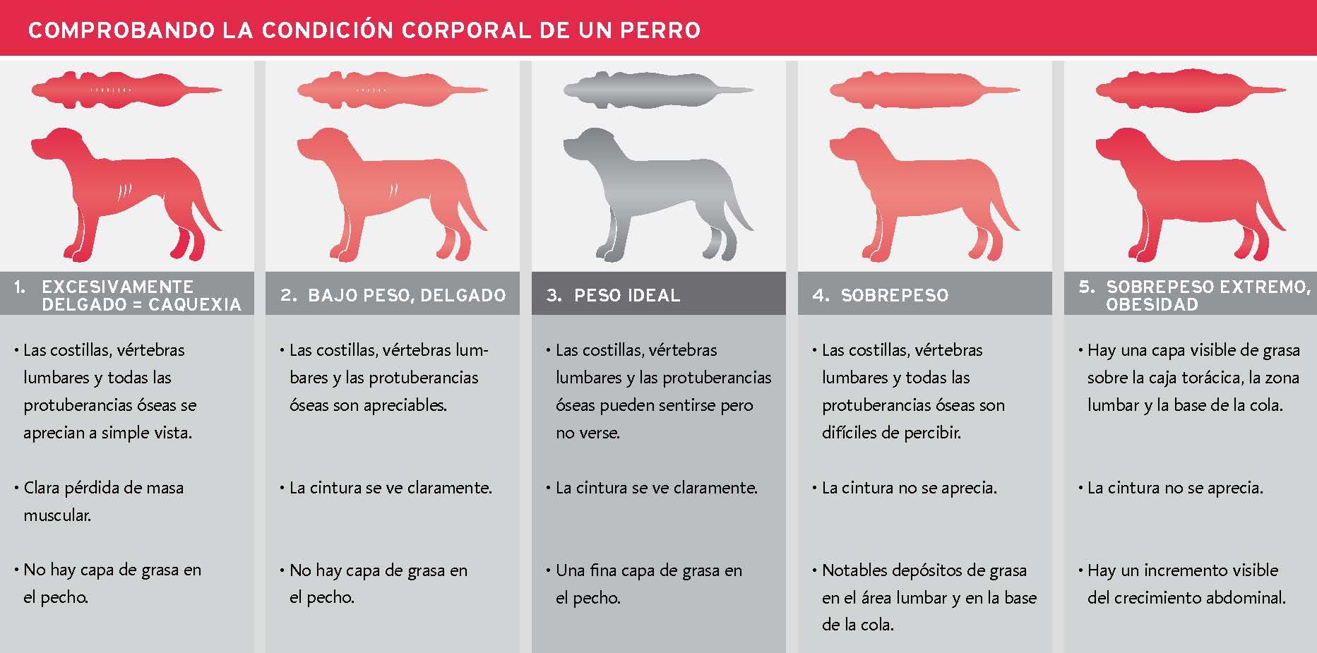 54 tabla condición corporal de un perro