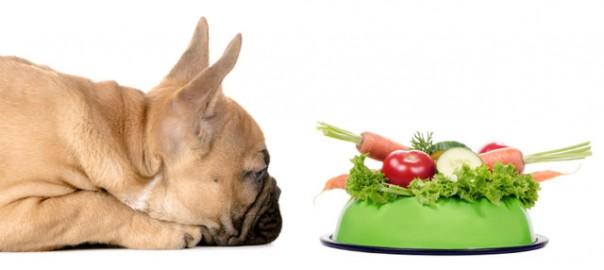59 perros vegetarianos