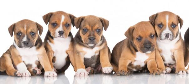 criar cachorros recien nacidos huerfanos