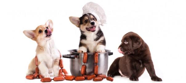 75 recetas caseras para perros