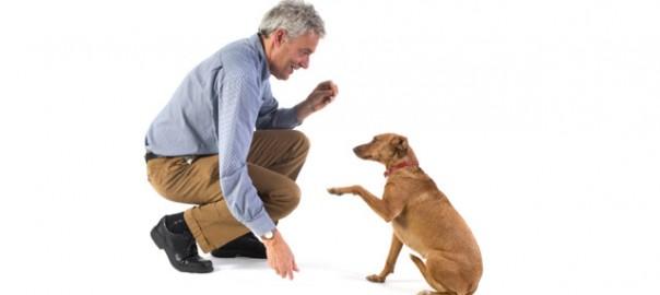 76 como alimentar a un perro mayor