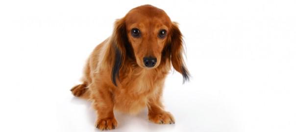 78 perros trineo 4_08