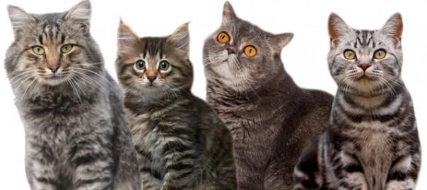 90 la taurina y los gatos 29_09