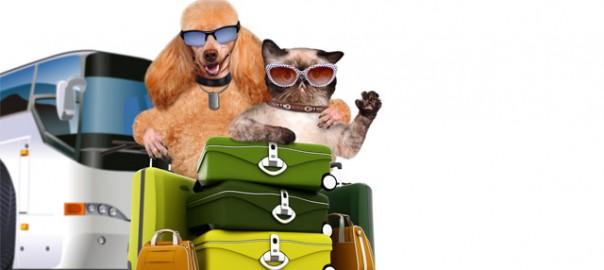92 mascotas viajando en autobus 6_10