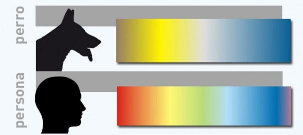 107 los perros y los colores 27_11