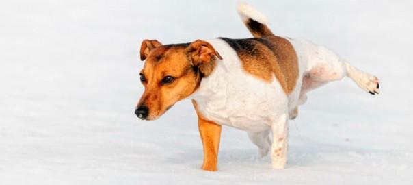 119 Por qué los perros levantan la pata al orinar 22_01