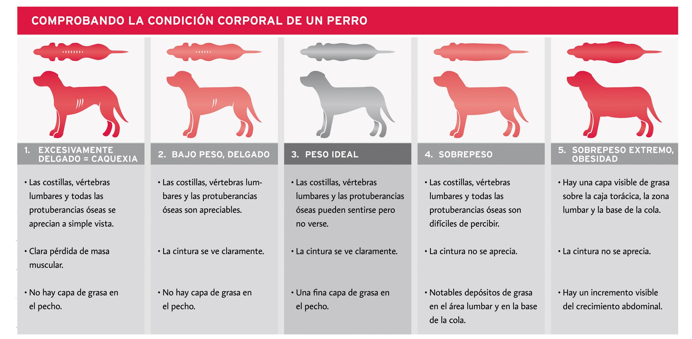 Condición corporal de un perro