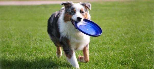 143 El frisbee 23_04