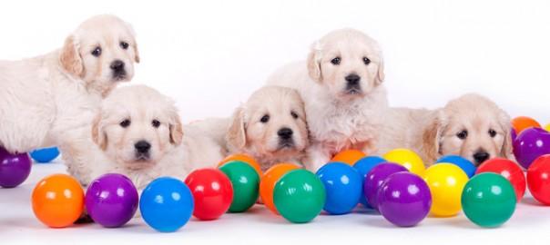 144 destete de cachorros 27_04
