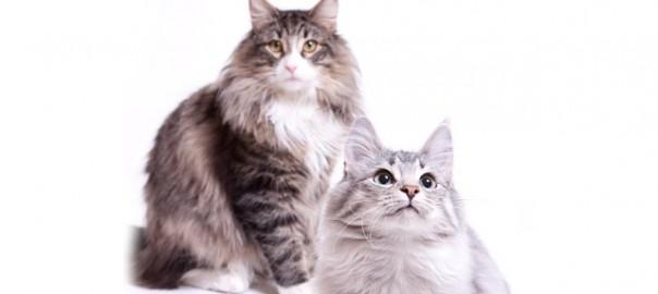 149 Recortar los bigotes a los gatos 14_05