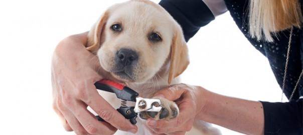 154 Como cortar las uñas a un perro 01_06