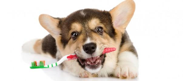 Resultado de imagen de higiene dental perros