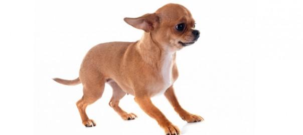 162 Perros inseguros 29_06