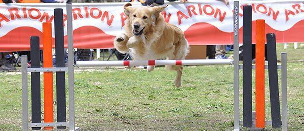 Los 5 puntos para evitar una lesión a un perro