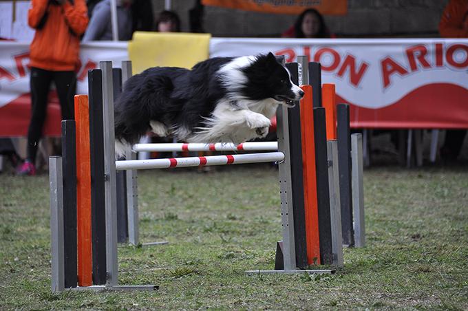 Los 7 pasos del calentamiento deportivo. Prepara a tu perro