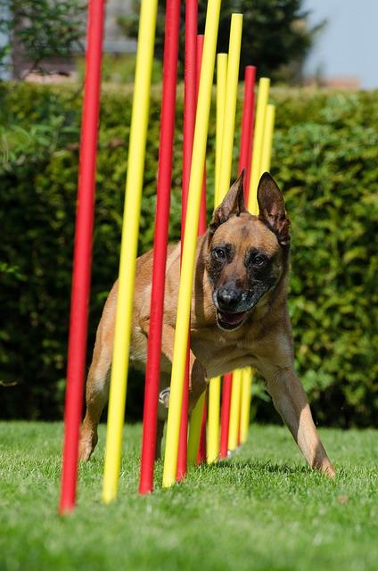 Consejos después de practicar deporte con tu perro