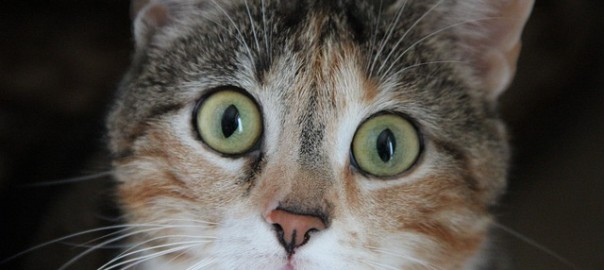 cat-278187_640