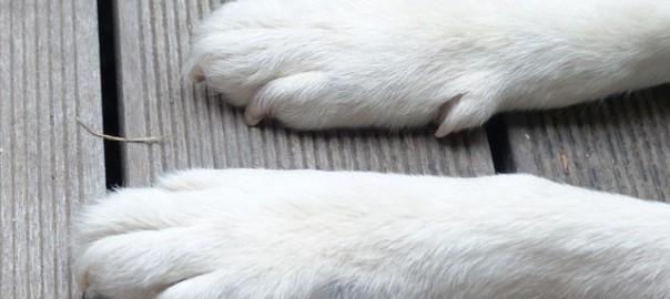 dog-186230_640