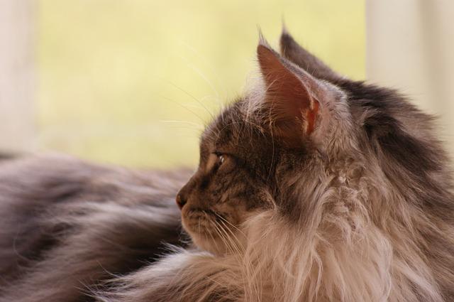 cat-961804_640