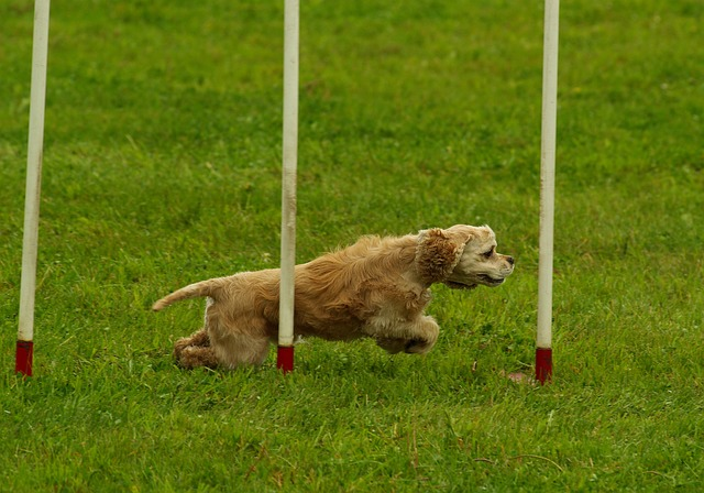 Cuidados del perro deportista