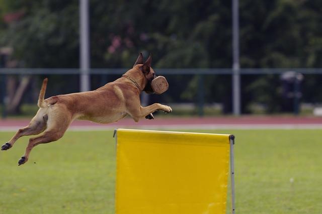 Trabajo y defensa con perros, IPO