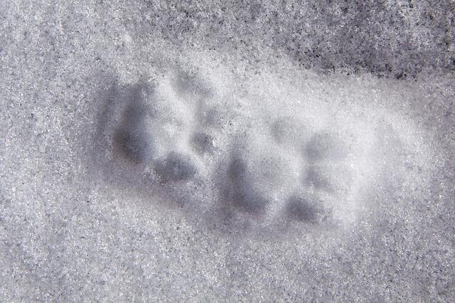 animal-track-76567_640
