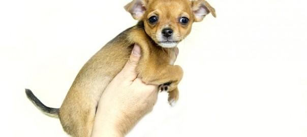 puppy-1047452_640