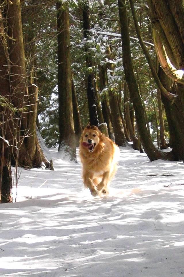 running-dog-1382761-640x960