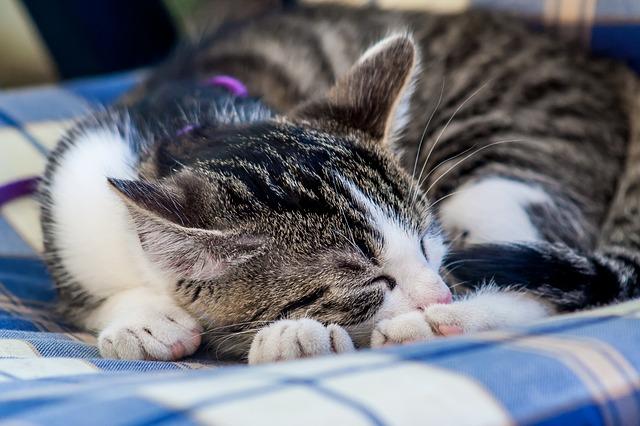 cat-919662_640