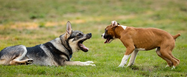 dogs-1041483_640