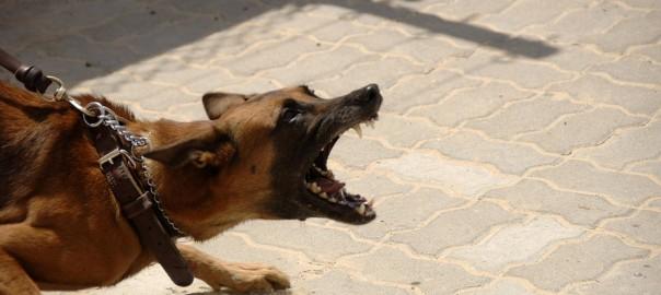 Resultado de imagen para Comportamiento defensivo del perro