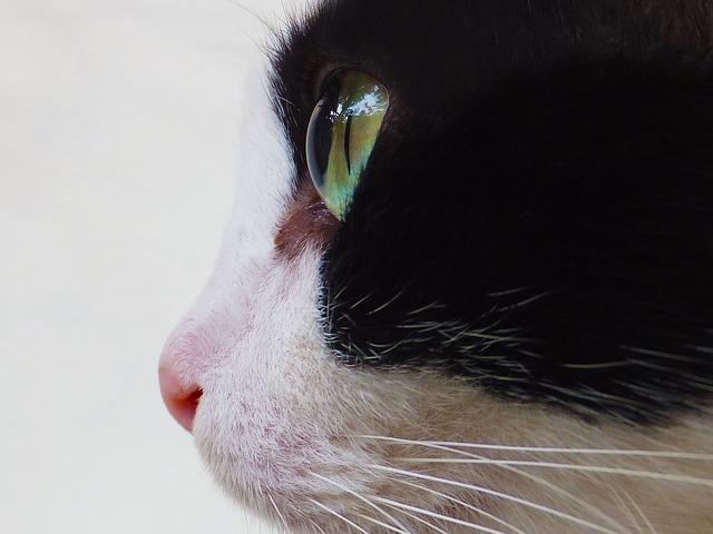 cat-123343_640