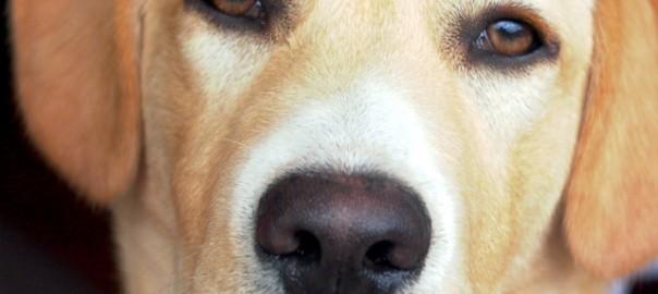 pérdida de apetito y micción frecuente en perros
