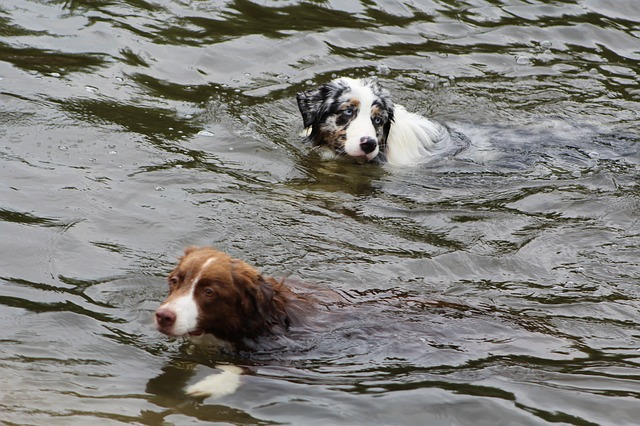 dogs-881552_640
