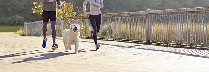 Practicar running con mi perro
