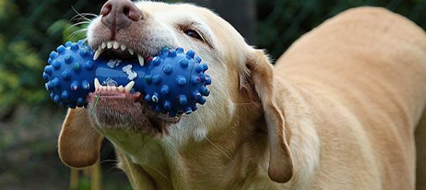 cuidado de la boca de tu perro