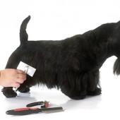tipos de cepillos y peines para perros