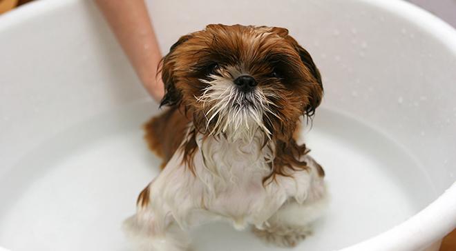 Bañar a un cachorro