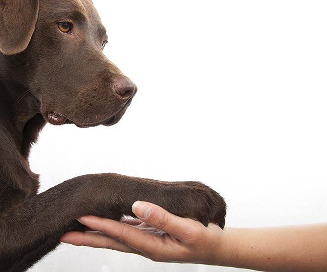 cuando tu terapeuta es un perro