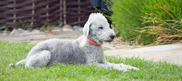 Leishmaniosis canina. Todo lo que hay que saber