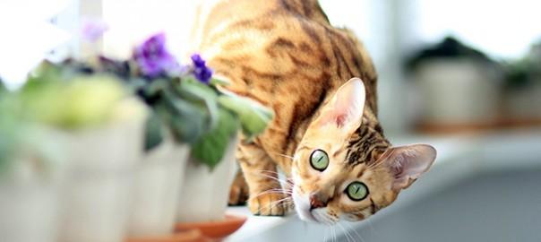 5 errores comunes sobre los gatos