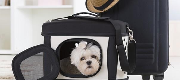 Viajaar con tu perro. Las 5 claves