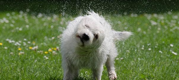 1El cuidado de la piel y el pelo de tu perro en verano