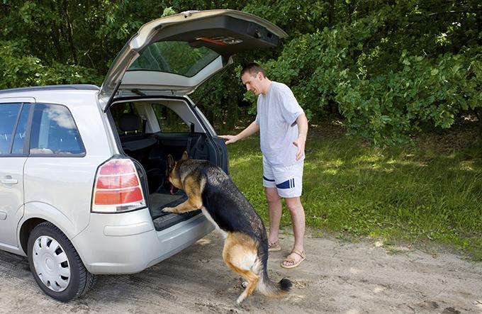 Viajar con perro. Las 5 claves