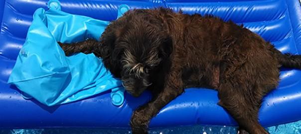 Mantener al perro fresco en verano. 3 trucos eficaces.