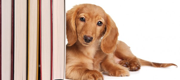 8 lecturas sobre perros y gatos