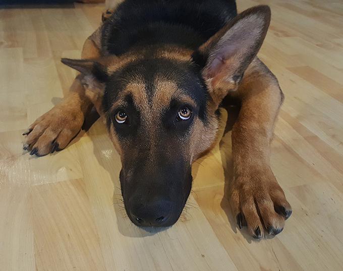 Perros con miedo a los petardos. 6 consejos para controlarle